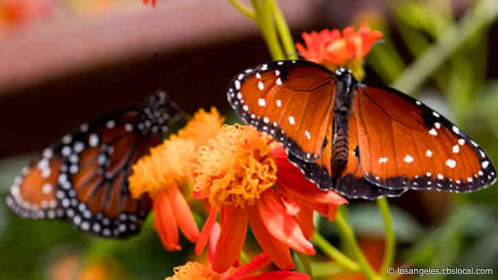 Natural History Museum's Butterfly Pavilion Reopens To The Public On March 18