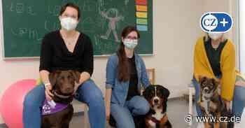 Ergotherapie in Celle und Lachendorf: So läuft die Therapie mit Hunden - Cellesche Zeitung