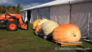 Port Elgin Pumpkinfest earns award recognition - BlackburnNews.com