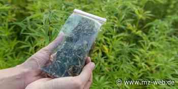 Waffen und Drogenhandel: Hat Mutter Cannabis-Plantage in Querfurt angebaut? - Mitteldeutsche Zeitung