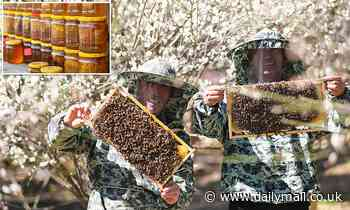 Has China messed with your honey? Far more 'honey' is sold than the world's bees produce