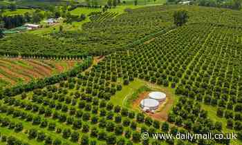 Incredible farm with 14,000 avocado trees goes up for sale - and you should see the quaint cottage