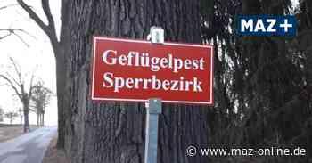 Prignitz: Geflügelpest-Ausbruch in Falkenhagen - Märkische Allgemeine Zeitung