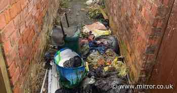 'Forgotten' street plagued by rats and rotting rubbish as residents beg for help