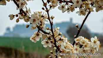 Se acerca la primavera al castillo de Tona - La Vanguardia