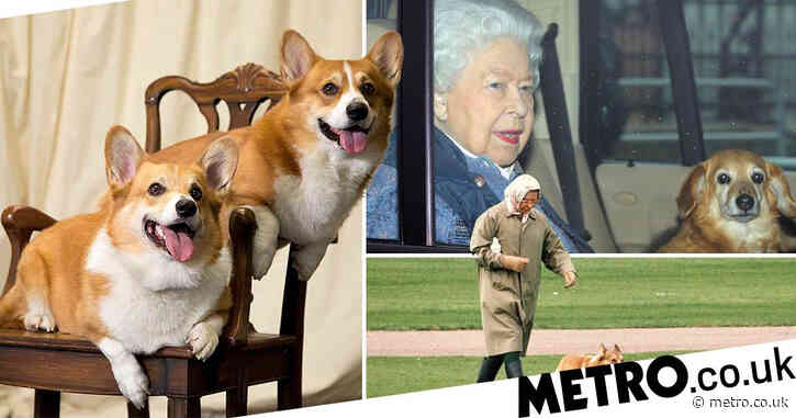 Queen given two new corgi puppies to comfort her through royal crisis