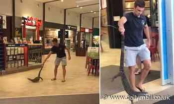 Good Samaritan carries a lost goanna out of a Cairns shopping centrein Queensland