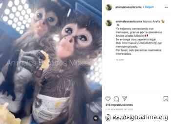 ¿Guacamayas, Tucanes, Monos? Entregas en todo México - insightcrime.org