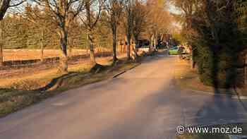 Landstraße: Fredersdorf-Vogelsdorf will Gehwege bauen - Was geschieht mit den Bäumen? - moz.de