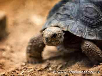 Former zoo employee sentenced for trafficking endangered Galapagos tortoises