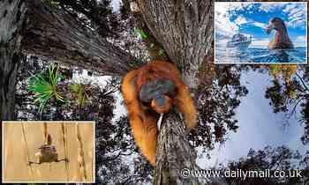 World Nature Photography Awards: Orangutan and owl feature in winning photos