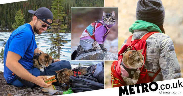 Cool cat trio love to hike, sledge, and kayak their way around Canada