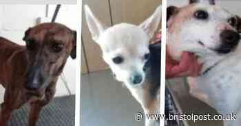 Do you recognise these dogs? Police are hunting for their owners