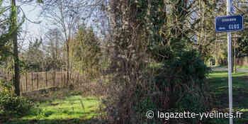 Un verger partagé pour exploiter un terrain inondable - La Gazette en Yvelines