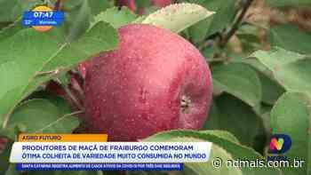 Produtores de maça de Fraiburgo comemoram ótima colheita de variedade muito consumida - ND Mais