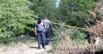 Noticia anterior Localizan cadáver en el puente Ameca - Noticias en Puerto Vallarta - Tribuna de la Bahía