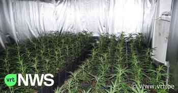 Politie Sint-Pieters-Woluwe ontdekt huis vol cannabis en xtc-pillen - VRT NWS