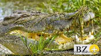 Unfall: Indonesien: Helfer schneiden Kinderleiche aus Krokodil-Bauch