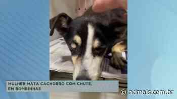 Mulher mata cachorro com chute em Bombinhas - ND Mais