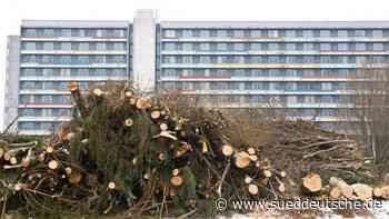 Kirchseeon: Grüne und SPD wollen Bäume besser schützen - Süddeutsche Zeitung