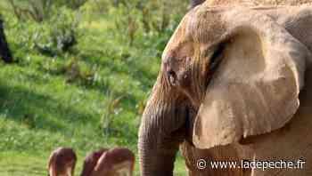 Plaisance-du-Touch. African Safari : les femelles aussi font la loi - ladepeche.fr