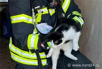 Loxstedt: Feuerwehr löscht Brand und rettet Katzen - Nord24