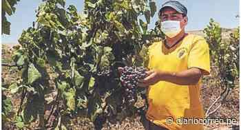 Producirán 4 mil litros de vino en Huarmey - Diario Correo