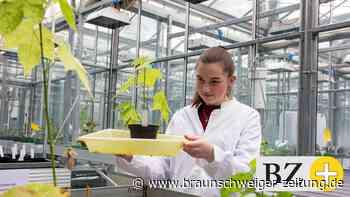 Grüner Beruf in Braunschweig in Natur und Labor