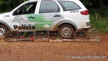 PM Ambiental flagra aves silvestres em cativeiro em Bariri - JCNET - Jornal da Cidade de Bauru