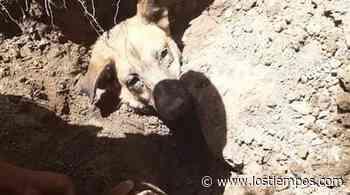 Rescatan perrita que fue enterrada viva en Tarija - Los Tiempos