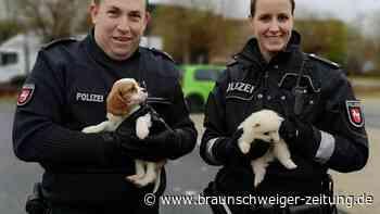 """Polizei und Feuerwehr: Tierretter in Uniform: """"Ein Tier gibt einem etwas zurück"""""""