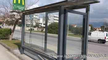 Restyling per le pensiline degli autobus » La Gazzetta di Viareggio - lagazzettadiviareggio.it
