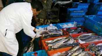 Chiclayo: decomisan 160 kg de tollo en Santa Rosa por incumplir talla LRND - LaRepública.pe