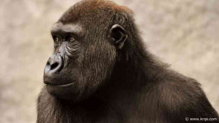 Humans evolved to need less water than primate relatives, study finds