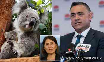Fears new protection deal is setting koalas up for extinction by leaving out farming and forestry