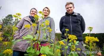 Saint-Pierre-du-Mont (40) : ils essaiment les jardins partagés - Sud Ouest