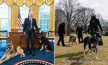 Joe Biden's dogs taken back to Delaware after displaying aggressive behavior and a biting incident