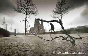 Bomen Elisabethpark worden dan toch niet gekapt (Koekelberg) - Het Nieuwsblad