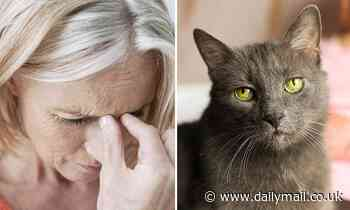 Woman loses part of her vision after being 'scratched by a CAT'