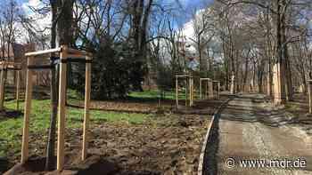 Neue Bäume für Landesgartenschau 2022 in Torgau - MDR