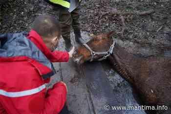 Chateauneuf-les-Martigues. Les pompiers tentent de sauver un cheval coincé dans un ruisseau - Châteauneuf-les-Martigues - Faits-divers - Maritima.info