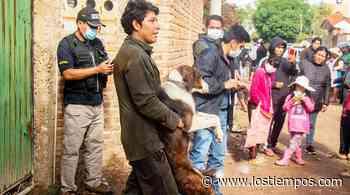 Aprehenden al dueño del perro que atacó a mujer en Pucara Grande - Los Tiempos