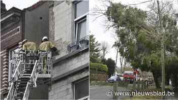 Brandweer heeft handen vol met ontwortelde bomen en weggevlogen dakpannen