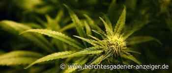 Marihuana und Amphetamin auf A8 sichergestellt: 31-Jähriger in Haft genommen - Berchtesgadener Anzeiger
