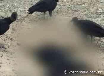 Teixeira de Freitas: Oito cachorros aparecem mortos e suspeita é de envenenamento - Voz da Bahia