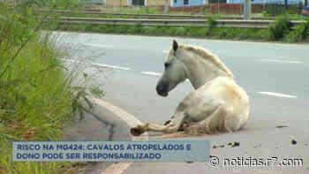 Dois cavalos são atropelados em rodovia de Vespasiano (MG) - HORA 7