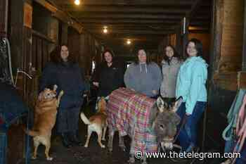 Grand Falls-Windsor initiative pairs people with horses for mental wellness - The Telegram