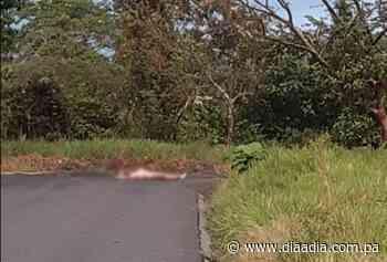 ¿Qué está pasando?, encuentran el cadáver desnudo de un hombre en Bugaba - Día a día