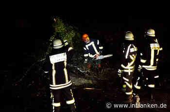 Lauf an der Pegnitz: Umgestürzter Baum blockiert Straße - inFranken.de