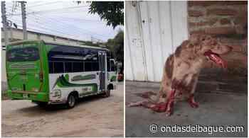 ¡Indignante! Conductor de bus arrolló a un perrito en Venadillo y huyó - Ondas de Ibagué